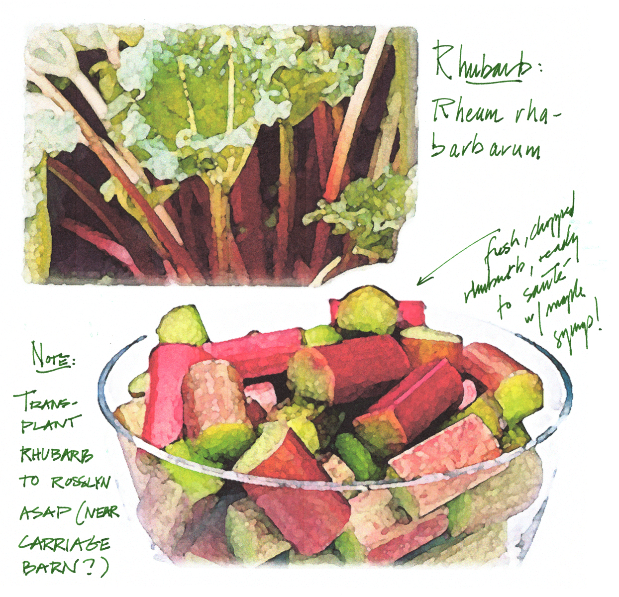 Rock Harbor Rhubarb